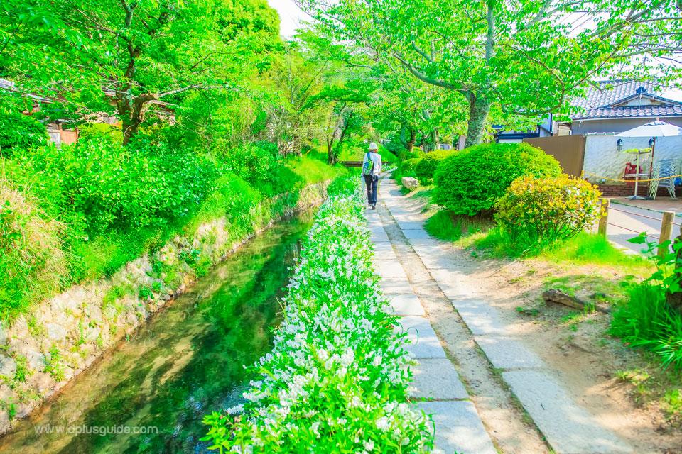 ถนนสายนักปราชญ์ (Philosopher's Path) จุดชมซากุระสุดสวยในเกียวโต
