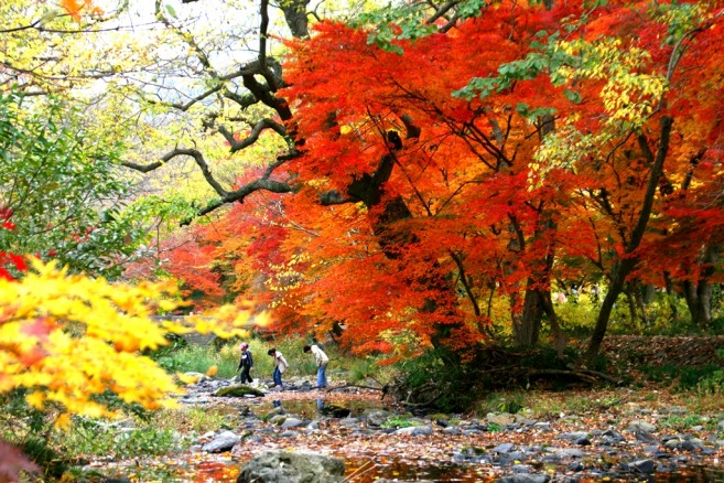 ฤดูใบไม้ร่วง นอกจากอากาศดีแล้วเรายังจะได้เห็นใบไม้เปลี่ยนเป็นสีส้มๆ แดงๆ สวยงามมากๆ!