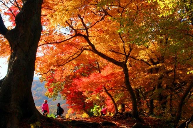"""ในภาพคือ Mt. Seonunsan ในช่วง """"ใบไม้เปลี่ยนสี"""" ซึ่งจะเห็นภาพแบบนี้ได้เฉพาะในช่วงฤดูใบไม้ร่วงเท่านั้น"""