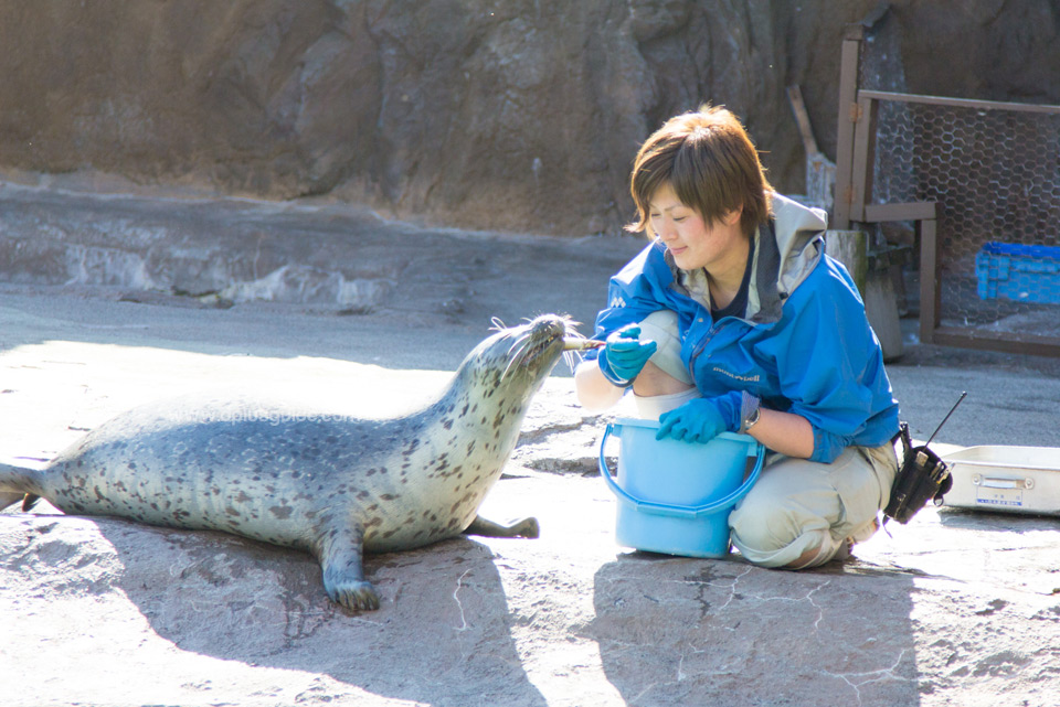 Asahiyama-Zoo_03