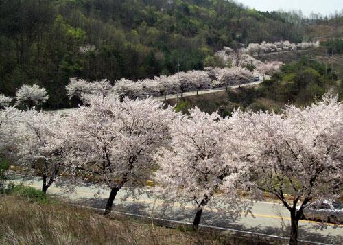Cheongpunghoban-