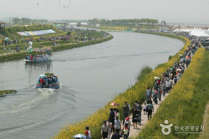 Hampyeong-Butterfly-Festival-1