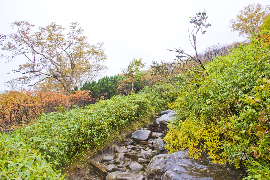 เส้นทางเดินพิชิตยอดเขาคุโรดาเกะ มีป่าไม้ธรรมชาติหลากสีตัดกับพื้นหินภูเขาไฟสีเข้มในบรรยากาศอากาศเย็นๆ ให้ชมตลอดทาง