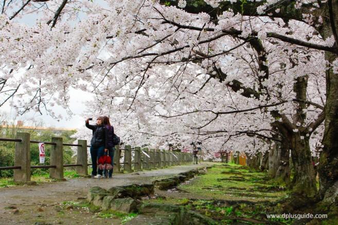 Maizuru-Park02