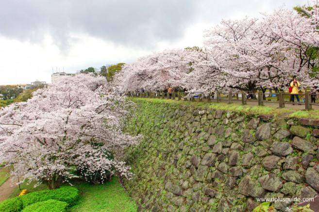 Maizuru-Park04