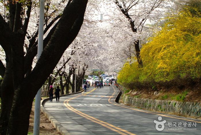 Namsan-Park
