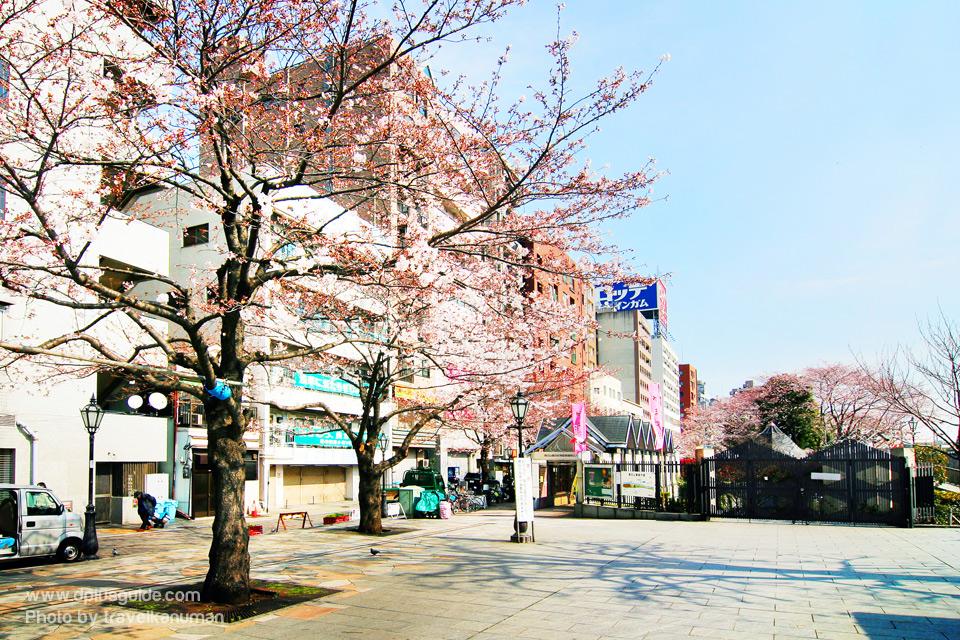 Sumida-Park_travelkanuman-04