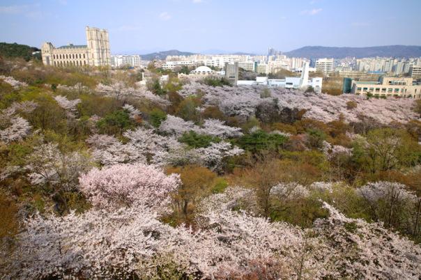 kyung-hee-university01