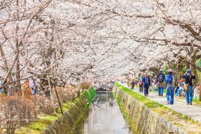 ถนนสายนักปราชญ์ (Philosopher's Path) สถานที่เที่ยวเกียวโต