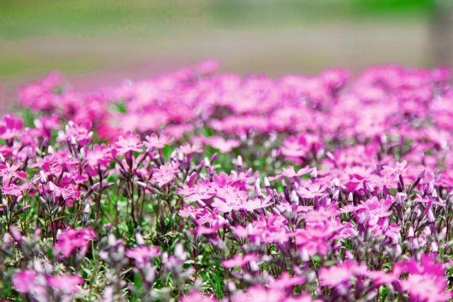 ซูมกันให้ชัดๆ ให้รู้ว่าเป็นดอกไม้จริงๆ นะ ไม่ใช่พรม!