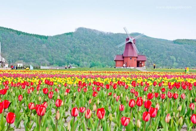 เที่ยวฮอกไกโด ฤดูไหนได้บ้าง?
