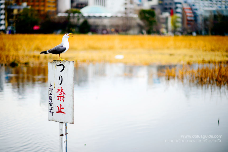 ueno-park6