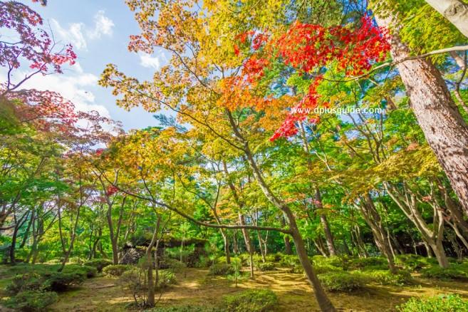 เที่ยวญี่ปุ่นชมใบไม้เปลี่ยนสีที่สวน Shouun Sanso เมือง Kashiwazaki จังหวัด Niigata