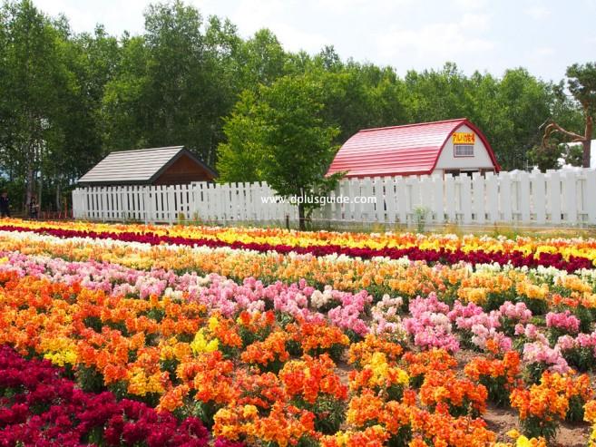 Shikisai Hill (Shikisai no Oka) เที่ยวฮอกไกโดชมสวนดอกไม้เส้นทาง Panorama Road เมือง Biei
