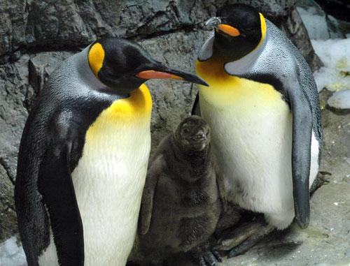 exhibit_penguin