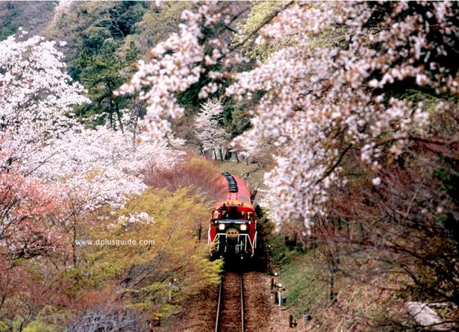 เที่ยวญี่ปุ่น นั่งรถไฟสายโรแมนติกซากาโนะ (Sagano Scenic Railway) ชมวิวเลียบแม่นํ้าโฮสุที่อาราชิยามา เมืองเกียวโต (Kyoto) ภูมิภาคคันไซ (Kansai)