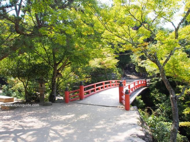 สวน Momijidani ส่วนที่ยังไม่เปลี่ยนเป็นสีแดง