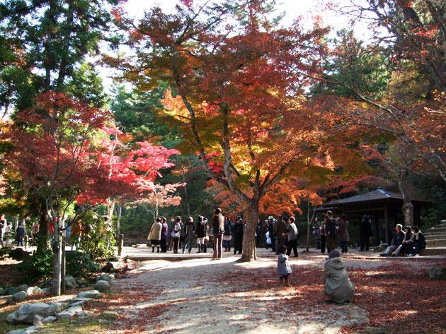 เที่ยวญี่ปุ่นฤดูใบไม้ร่วง ใบไม้เปลี่ยนสี ที่สวนโมมิจิดานิ (Momijidani)