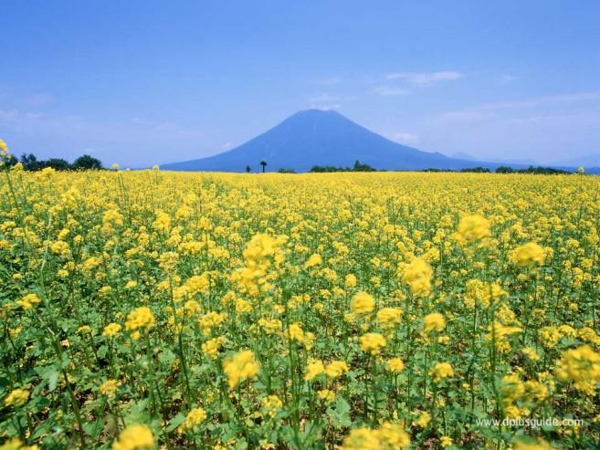 นิเซโกะ (Niseko) แหล่งสกีรีสอร์ทที่ฮอกไกโด (Hokkaido)