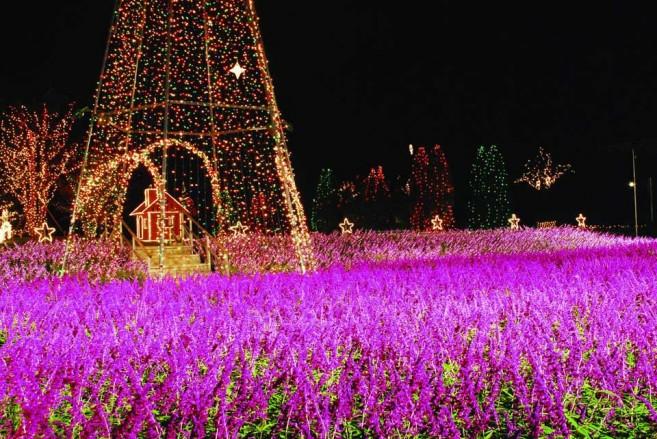 เที่ยวเทศกาลประดับไฟฤดูหนาวที่ญี่ปุ่น Flower Fantasy เทศกาลประดับไฟในสวน Ashikaga Flower Park