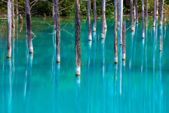 เที่ยวฮอกไกโด Blue Pond สระมรกต หรือบ่อน้ำสีฟ้า เมืองบิเอ (Biei) ฮอกไกโด