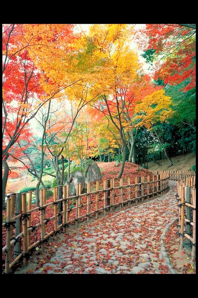 เที่ยวญี่ปุ่นฤดูใบไม้ร่วง ชมสวนริทสึรินยามใบไม้เปลี่ยนสี