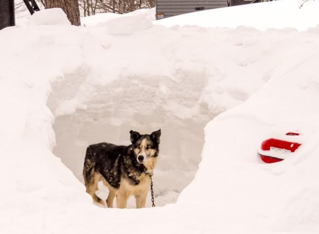 ระหว่างนั้นน้องหมาก็ต้องหลบลมหนาวอยู่ในโพรงก่อน ออกมายืนเฉยๆ นานๆ ไม่ไหว มันหนาว