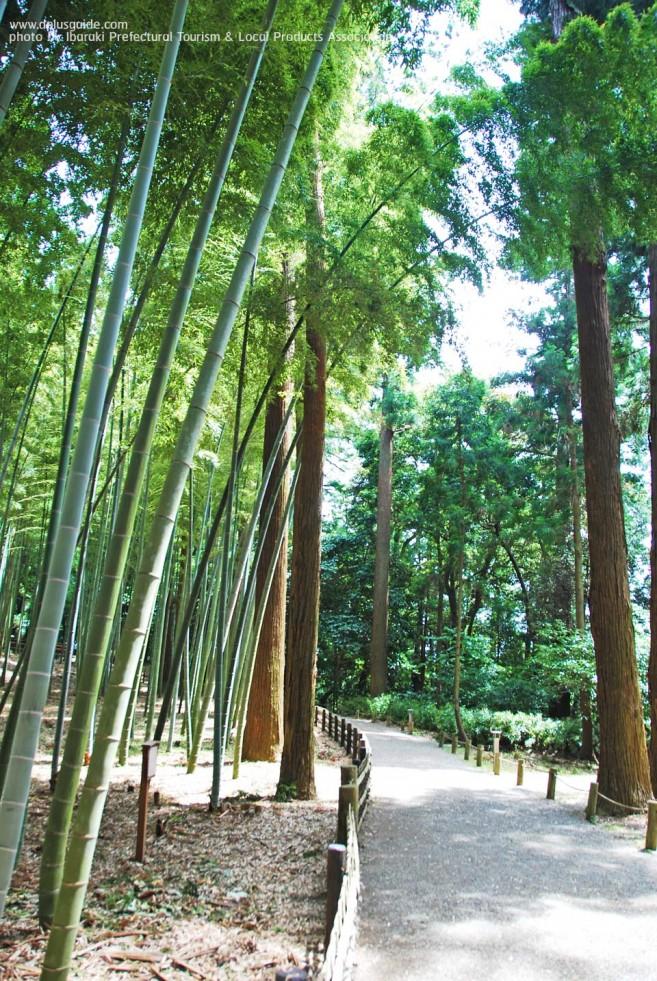 เที่ยวญี่ปุ่น สวนไคระคุเอ็น (Kairakuen) 1 ใน 3 ของสวนญี่ปุ่นที่มีทิวทัศน์สวยสุด ที่เมืองมิโตะ (Mito)