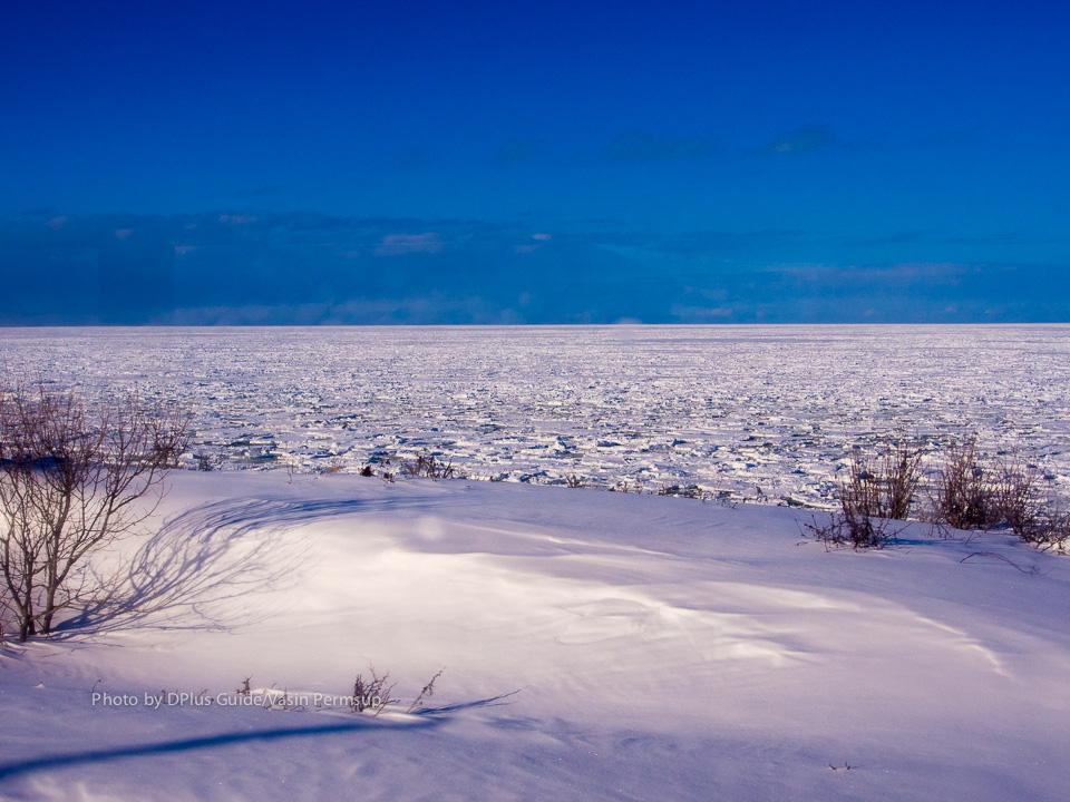 บางช่วงก็จะเห็นแผ่นน้ำแข็ง (drift ice) ลอยมาติดฝั่งแบบนี้