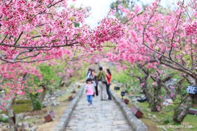 ปราสาทนาคิจิน (Nakijin) เมืองนาโงะ (Nago) เกาะโอกินาวา (Okinawa)