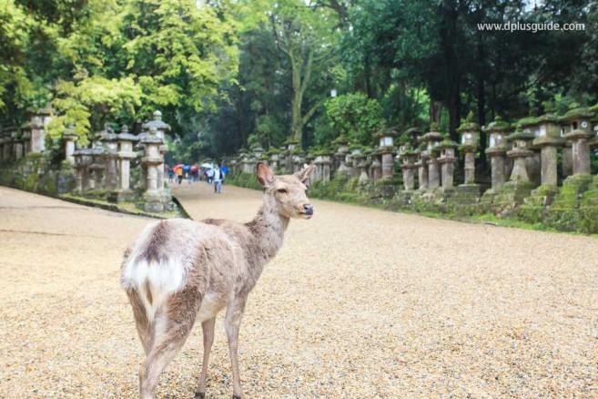 Kasuga Taisha Shrine 02