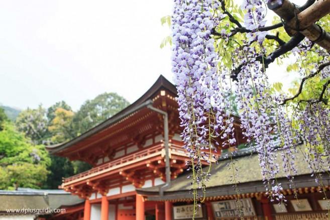 Kasuga Taisha Shrine 03