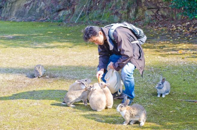 เที่ยวญี่ปุ่น ไปดูเกาะกระต่ายที่ Okunoshima จ.ฮิโรชิม่ากัน!