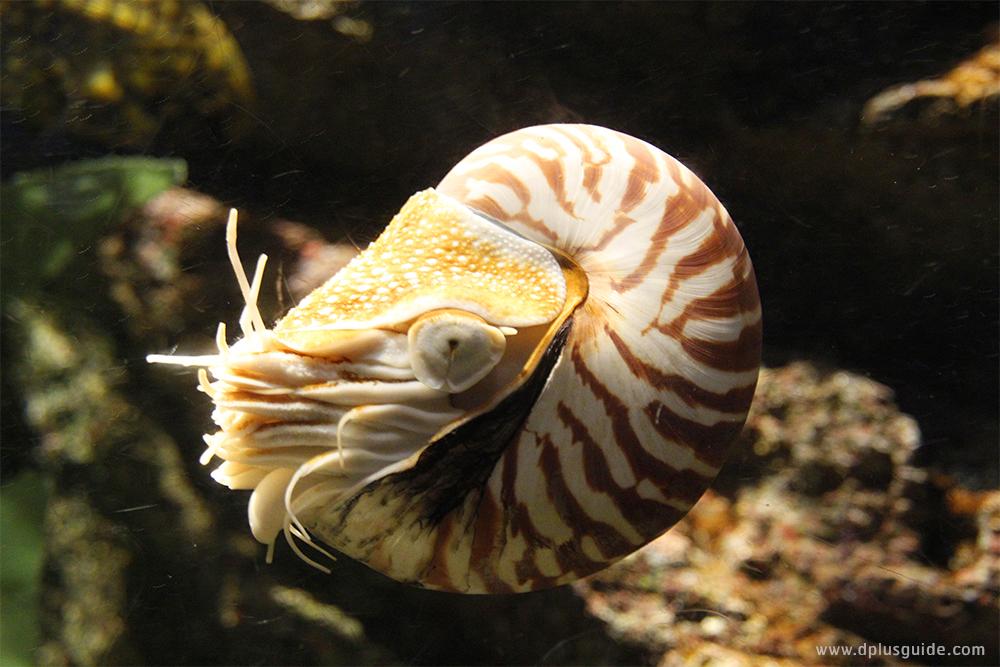 สัตว์น้ำที่ SEA LIFE Bangkok Ocean World กรุงเทพฯ
