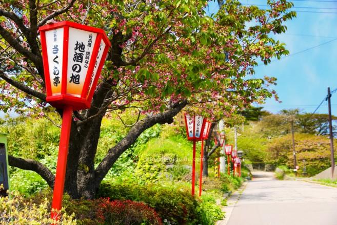เที่ยวฮอกไกโด ซุ้่มงานเทศกาลซากุระ ปราสาท Matsumae Castle ยามดอกซากุระผลิบาน