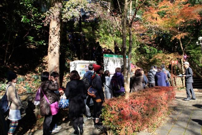 nature-trip-around-tokyo_MG_9369