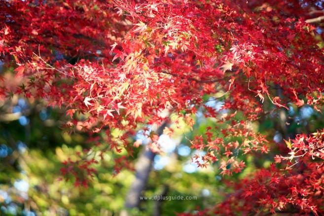 nature-trip-around-tokyo_MG_9830