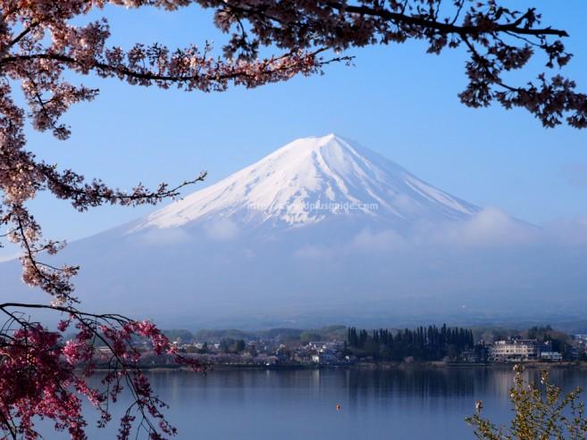 เที่ยวญี่ปุ่น ภาพภูเขาไฟฟูจิจากมุมทะเลสาบ Kawaguchiko