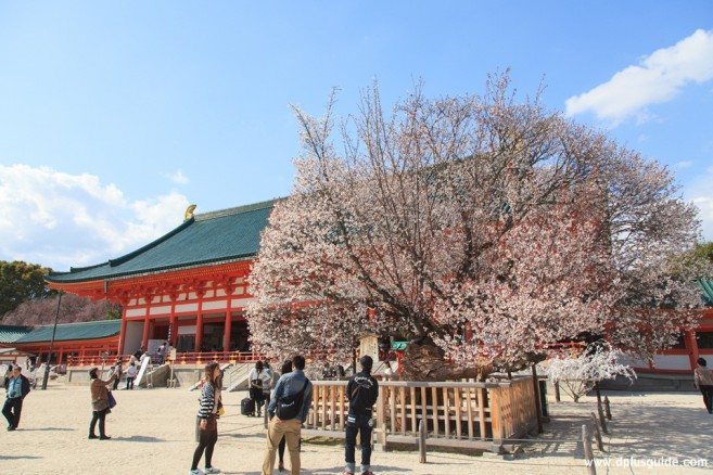 เที่ยวญี่ปุ่น เที่ยวคันไซ เที่ยวเกียวโต ศาลเจ้าHeian