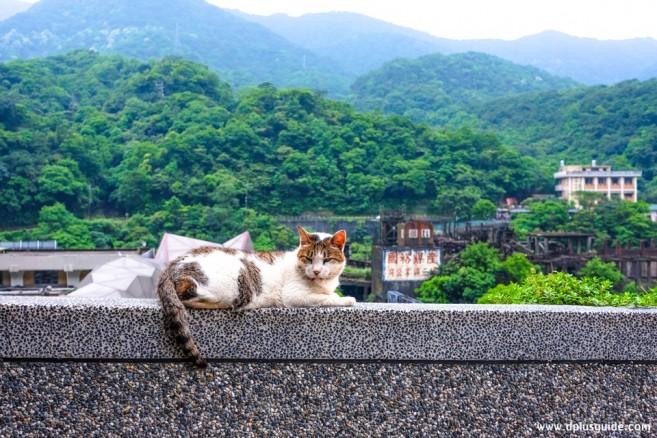 เที่ยวไต้หวัน ทาสแมวห้ามพลาด ไปเที่ยวที่หมู่บ้านแมว Houtong Cat Village