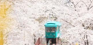 สวนสาธารณะ Funaoka Joshi Park เมืองเซ็นได ชมซากุระบนรถราง อย่างฟิน!