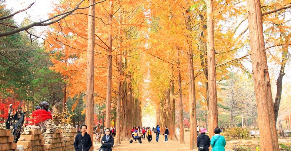 เที่ยวเกาหลี เกาะนามิ (Nami-som) ตามรอยซีรี่ส์เกาหลีสุดโรแมนติก | DPlus  Guide