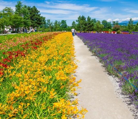 เที่ยวฮอกไกโด ตะลุย 9 สวนสวย เหนือจรดใต้