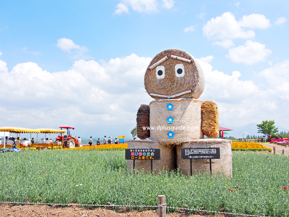เที่ยวฮอกไกโดชมสวนดอกไม้เส้นทาง Panorama Road เมือง Biei