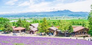 เที่ยวฮอกไกโดชมทุ่งลาเวนเดอร์และดอกไม้ 5 สี ที่ฟาร์มโทมิตะ (Hokkaido Lavender Tomita Farm)