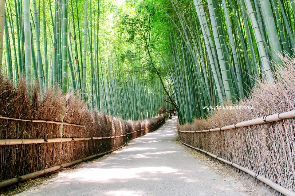 ชมธรรมชาติเส้นทางเลียบป่าไผ่ที่อาราชิยามา (Arashiyama) เมืองเกียวโต (Kyoto)