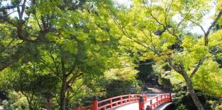 เที่ยวญี่ปุ่นฤดูใบไม้ร่วง ชมใบไม้เปลี่ยนสี ที่สวนโมมิจิดานิ (Momijidani)