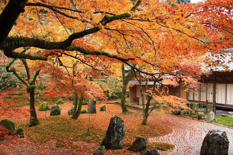 เที่ยวญี่ปุ่นชมใบไม้เปลี่ยนสี ที่วัด Komyozenji เมือง Dazaifu จังหวัดฟุกุโอกะ
