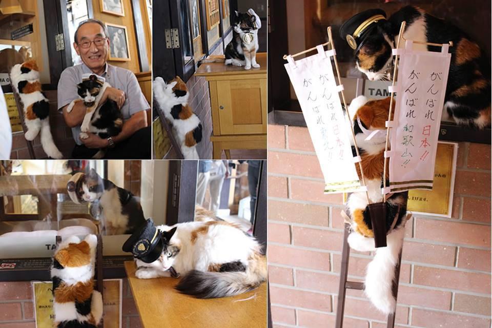 """ตามรอยแมวเหมียวนายสถานี """"เจ้าทามะ"""" ขวัญใจทาสแมวแดนปลาดิบ"""