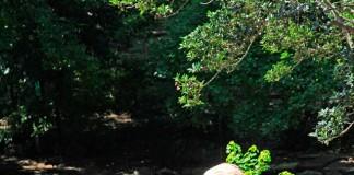 เที่ยวญี่ปุ่น สวนสัตว์ Higashiyama ดูสัตว์ ชมสวนพฤกษศาสตร์ ขึ้นหอชมวิว 3 in 1 แบบนี้ที่จูบุ